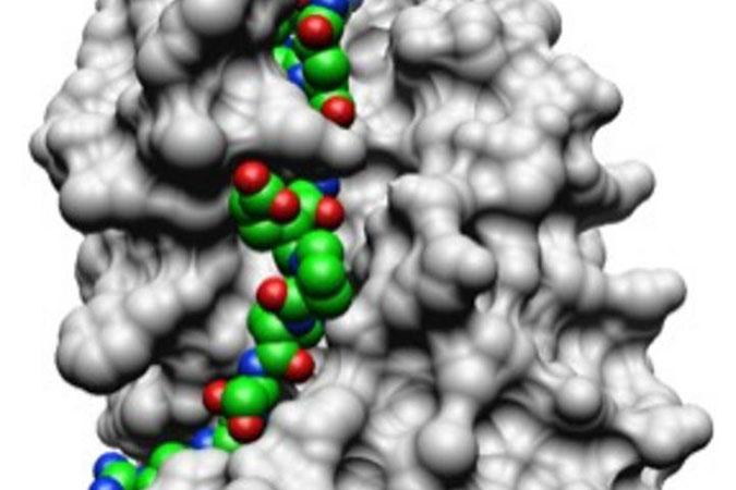 Biochemistry and Biophysics Ph.D.